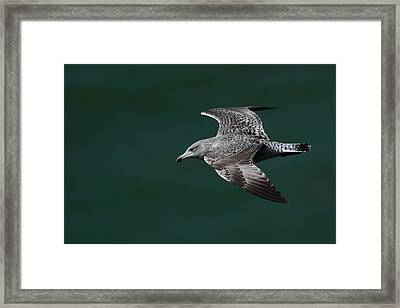 Flyby Framed Print by Richard Patmore