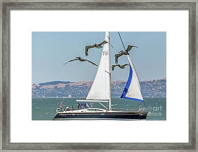 Flyby Two Framed Print by Kate Brown