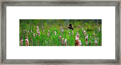 Flying Amongst Cattails Framed Print by James F Towne
