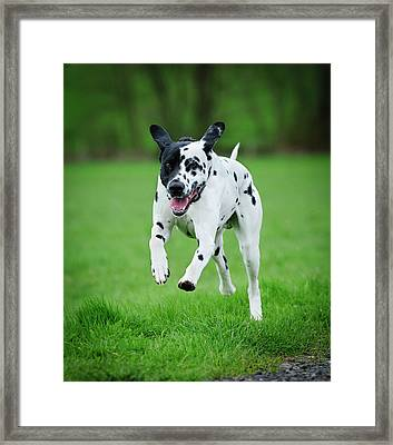 Flying Ares Framed Print by Andy-Kim Moeller