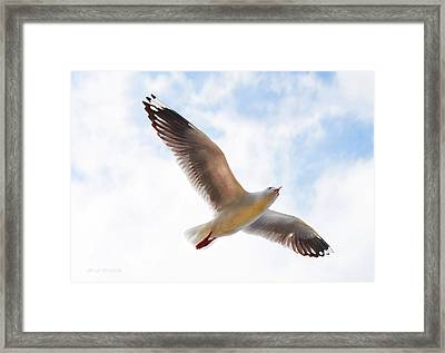 Flying Away From The Madness Framed Print