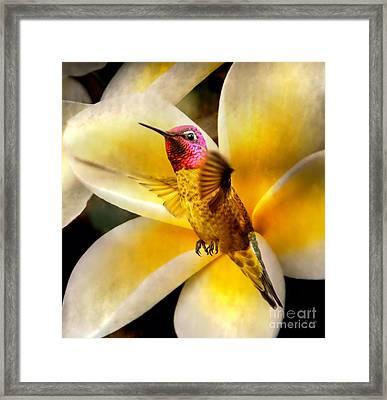 Flying Beauty Framed Print