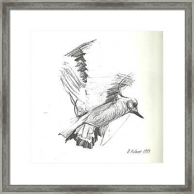 Flying Bird Sketch Framed Print