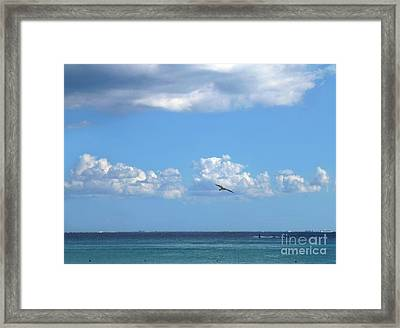 Framed Print featuring the photograph Flying By The Sea by Francesca Mackenney