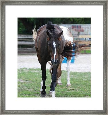 Flying Circus Framed Print by Rob Hans