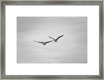 Flying Companions Framed Print