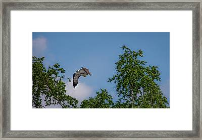 Framed Print featuring the photograph Flying Crappie by Onyonet  Photo Studios