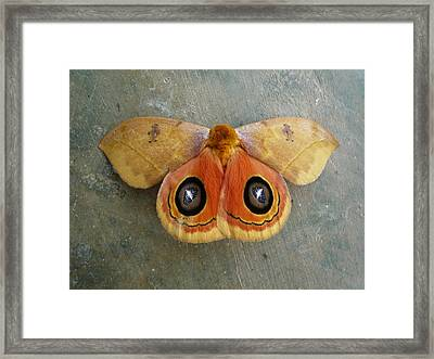 Flying Creatures No.1 Framed Print by Gregory Young