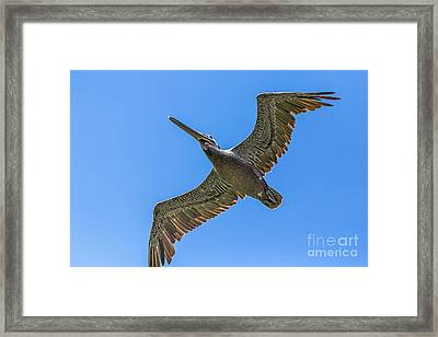 Flying Dino Framed Print by Kate Brown