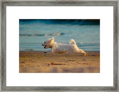 Flying Dog Framed Print by Harry Spitz