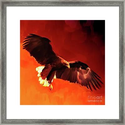 Flying Eagle  Framed Print by Gull G
