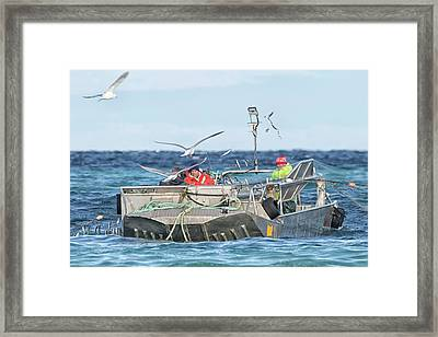 Framed Print featuring the photograph Flying Fish by Randy Hall