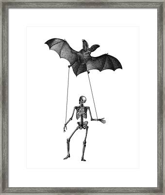 Flying Fox With Skeleton On A String Framed Print