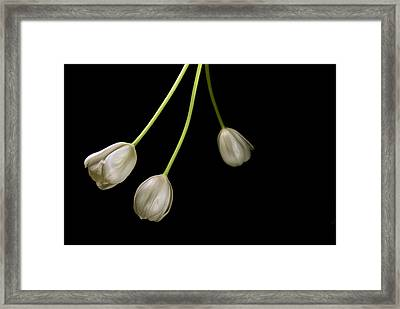 Framed Print featuring the photograph Flying Free by Elsa Marie Santoro