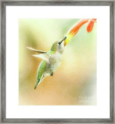 Flying Free Hummingbird Framed Print