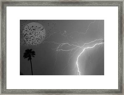 Flying From The Storm Bw Framed Print by James BO  Insogna