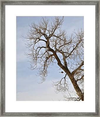 Flying Goose By Great Tree Framed Print