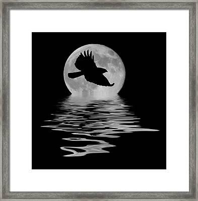 Flying Hawk 1 Framed Print