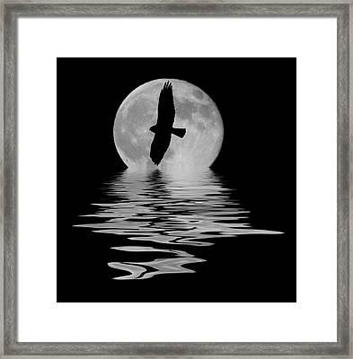 Flying Hawk 2 Framed Print