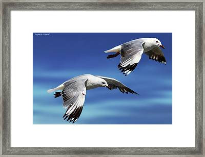 Flying High 0064 Framed Print