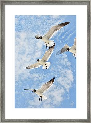 Framed Print featuring the photograph Flying High by Jan Amiss Photography