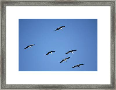 Flying In Formation Framed Print