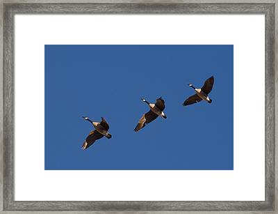 Framed Print featuring the photograph Flying In Formation by Monte Stevens
