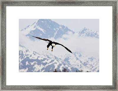 Flying In The Mountains Framed Print by Tim Grams