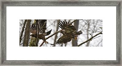 Flying In The Woods Pe002 Framed Print by Yoshiki Nakamura
