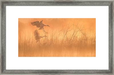 Framed Print featuring the photograph Flying Into The Light And Fog by Kelly Marquardt
