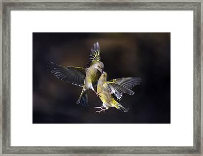 Flying Kiss 11 Framed Print by Marco Redaelli