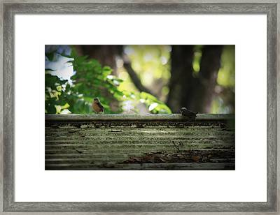 Flying Lessons Framed Print by Mandy Shupp