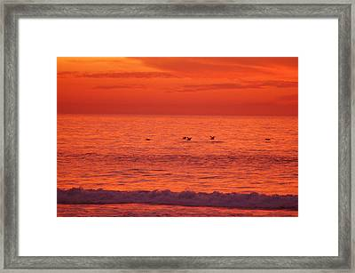 Flying Low Framed Print by Jean Booth