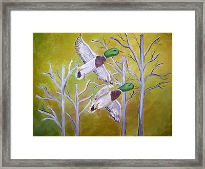 Flying Mallards Framed Print by Belinda Lawson