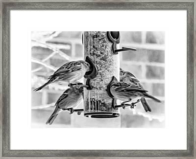 Flying Piglets Bw Framed Print