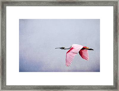 Flying Pretty - Roseate Spoonbill Framed Print