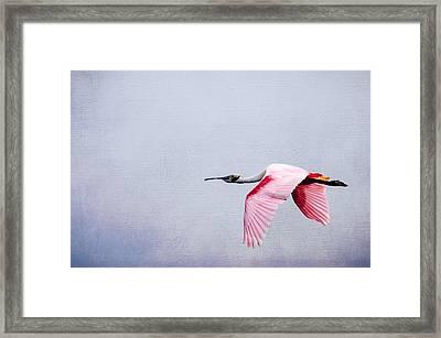 Flying Pretty - Roseate Spoonbill Framed Print by Debra Martz