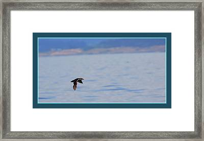 Flying Rhino Framed Print by BYETPhotography