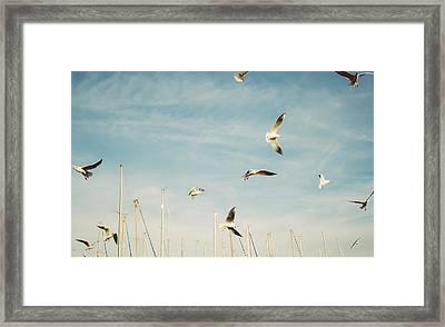 Flying Seagulls Framed Print