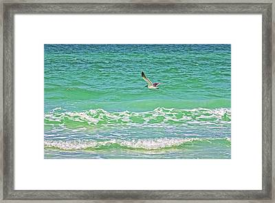 Flying Solo Framed Print by HH Photography of Florida