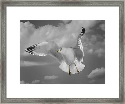 Flying Solo Framed Print by Steven Michael
