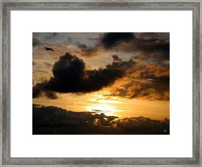 Flying Solo Framed Print by Will Borden