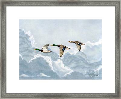 Flying South Framed Print by Sarah Batalka