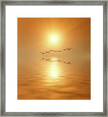 Flying South Framed Print by Wim Lanclus