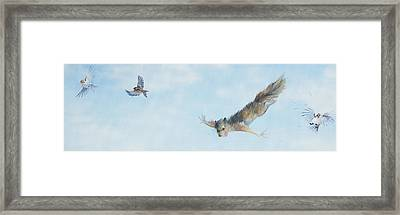 Flying Squirrel Framed Print