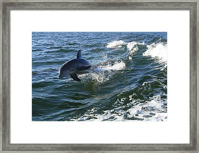 Flying Framed Print by Tara Moorman Photography