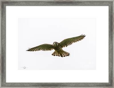 Flying Framed Print by Torbjorn Swenelius