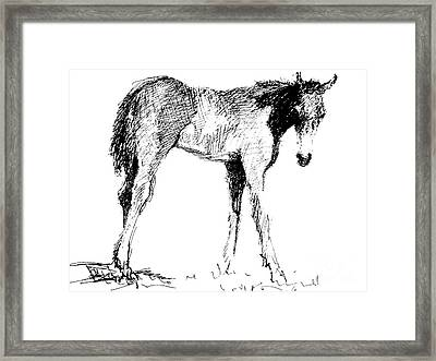Foal In Black And White Framed Print