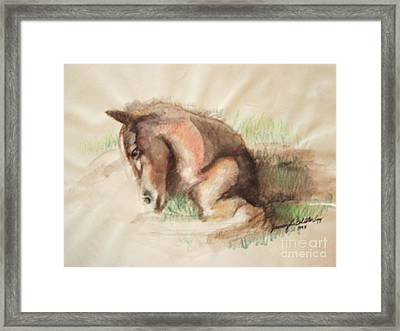 Foal Framed Print by Jamey Balester