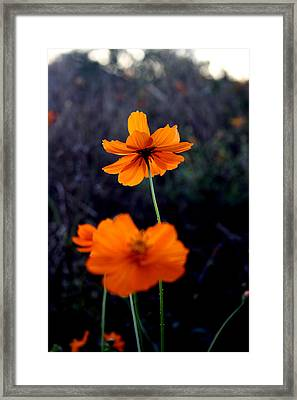 Focus Framed Print by Alexandra Harrell